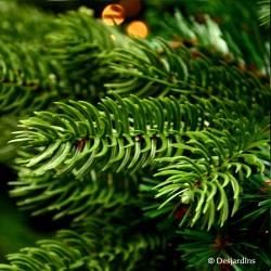 "Sapin artificiel ""Sherwood Spruce Green"" -  215cm"