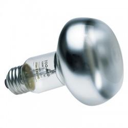 Ampoule chauffante Zolux - 40 W