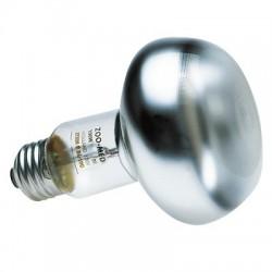 Ampoule chauffante Zolux - 100 W