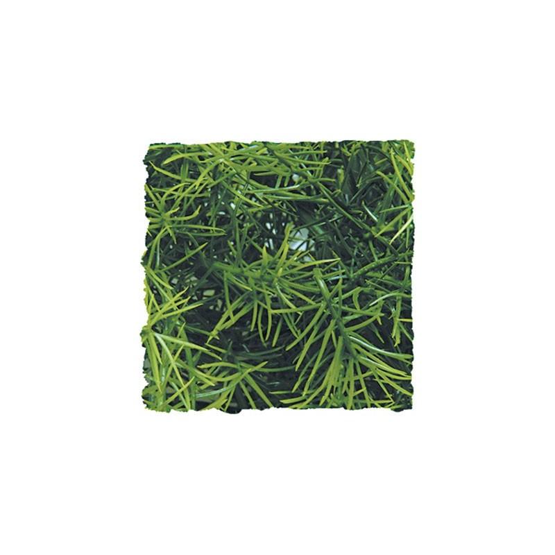 Plante Cashuarina - 46 cm