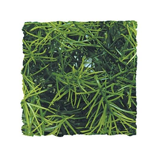 Plante Cashuarina - 46cm