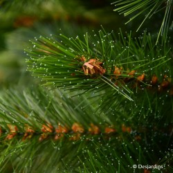 """Sapin artificiel """"Forest Frosted Pine"""" - 215cm"""